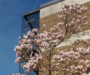 magnolia poem